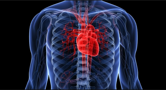 Understand How the Heart Works Inside and Out: Watch How Blood Flows Inside the Heart