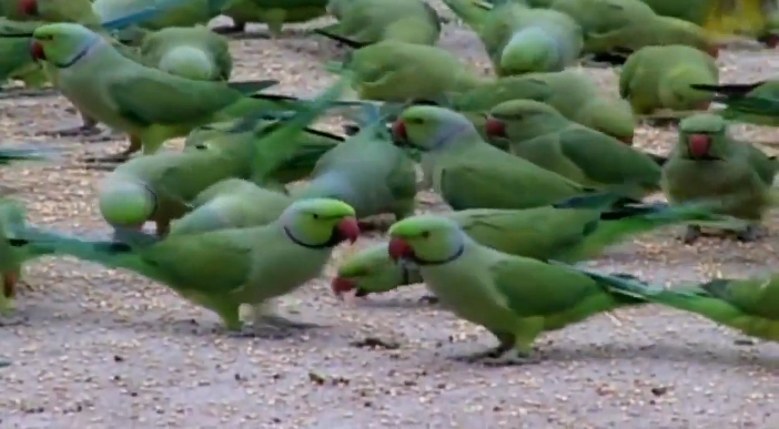 Bird Lover Gives Friends Eat-All-You-Can Treat. See How Many They Are…