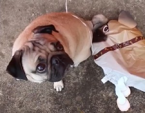 This Cute Dog Misses His Twin. You'd Probably Cry Too Watching Him!