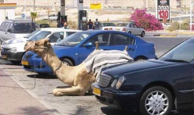 Camel Parking Space