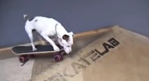 Who Says Dogs Can't Skateboard? Check This Dog Out!