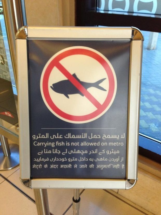 No Sharks Allowed