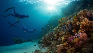 Top 9 Dangerous Coral Reef Inhabitants to Watch Out For