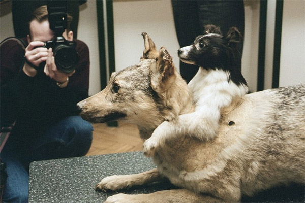 Two-headed-dogs