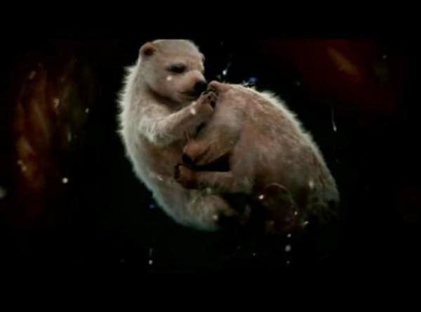 12-animals-in-the-womb-polar-bear