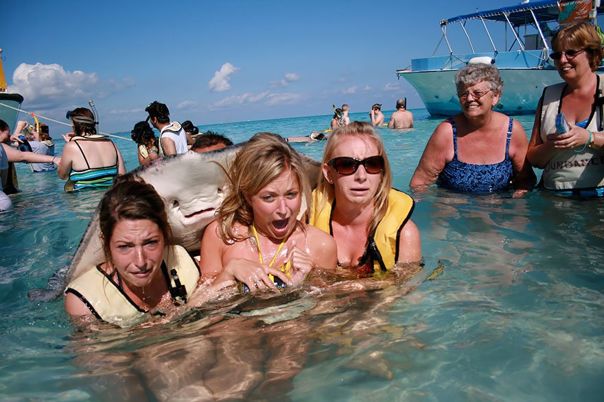 20 Amazing Animals You'd Want to Learn Photobombing Skills From