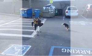 Google's Robot vs. Terrier – Guess Who Won?