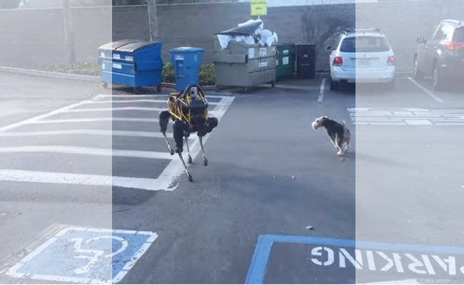 Google's Robot vs. Terrier – Guess Who Won?