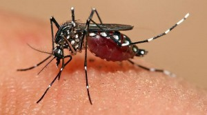 American Contracted Zika During Stay in PH. Read On to Learn from DOH's Advise for Filipinos